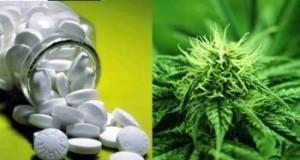 Deaths from Marijuana Vs 17 FDA Approved Pill Drugs (Study) | Third Monk