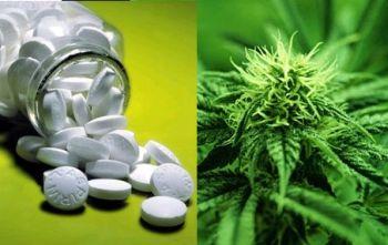 Deaths from Marijuana Vs 17 FDA Approved Pill Drugs (Study)   Third Monk