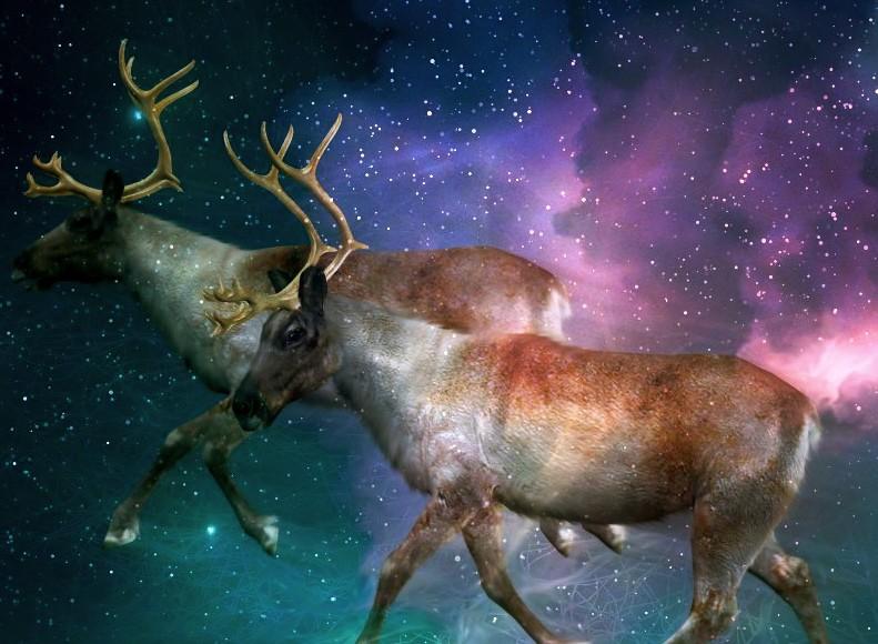 Reindeers Crave Magic Mushrooms (Video)   Third Monk