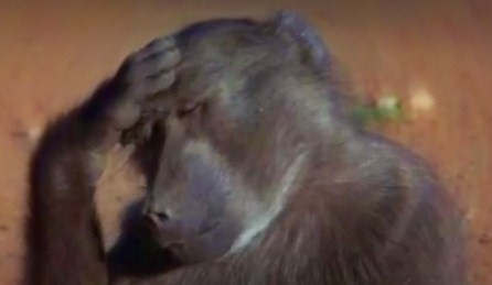 African Animals Get Drunk From Eating Marula Fruit (Video) | Third Monk