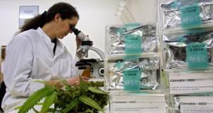 Medical Marijuana - Impact on Human Health Documentary (Video) | Third Monk image 3