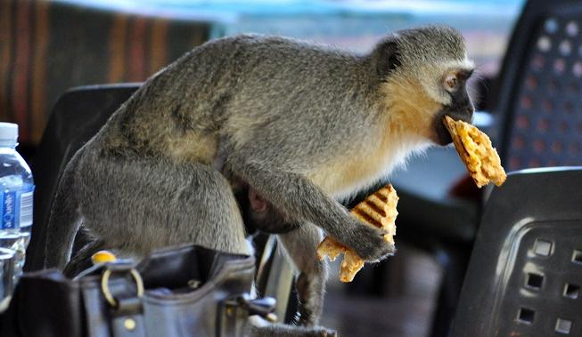 Funny Animals Stealing Food From People Compilation (Video) | Third Monk