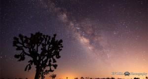 Joshua Tree Under the Milky Way Galaxy, Time Lapse (Video) | Third Monk