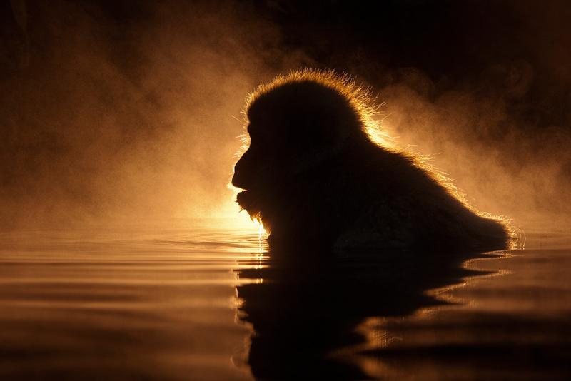 Animals Illuminated by Sunset (Photo Gallery)   Third Monk image 13