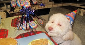 Funny Stoner Dogs Photo Gallery | Third Monk image 15