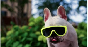 Funny Animals Wearing Glasses Photo Gallery | Third Monk image 1