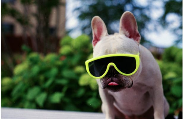 Funny Animals Wearing Glasses Photo Gallery   Third Monk image 1