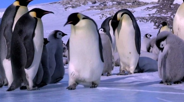 Penguin Fails and Bloopers Compilation (Video) | Third Monk