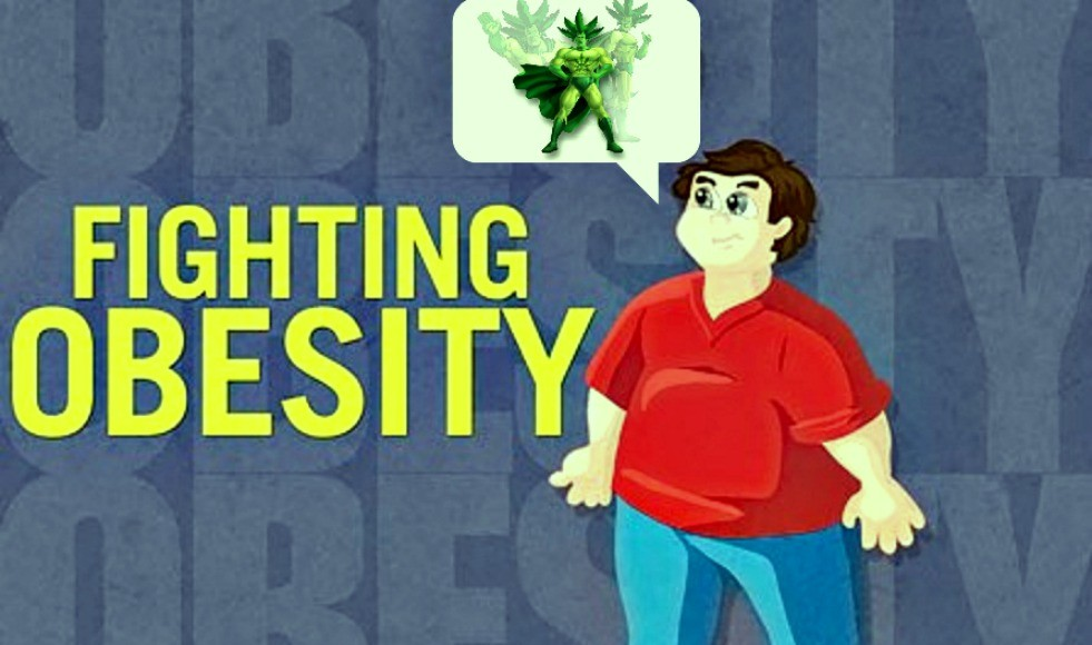Cannabis Use Lowers Risk of Obesity and Diabetes (Study) | Third Monk image 2