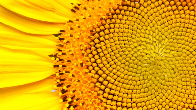 The Fibonacci Sequence: Nature by Numbers (Video)   Third Monk image 1