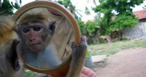 Scientists Officially Recognize Animal Consciousness Equal to Humans | Third Monk image 1