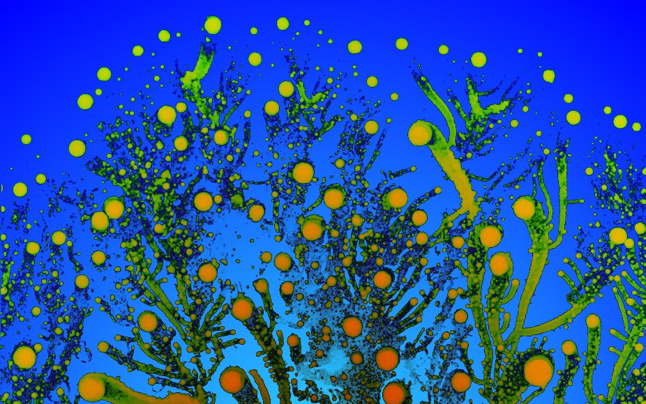 Psychedelic Fractals Formed By Bacteria Colonies, Art Gallery   Third Monk image 7