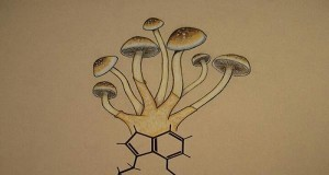 Magic Mushrooms Stimulate Growth of New Brain Cells (Study) | Third Monk image 2