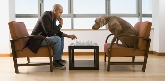 The Intelligent and Conscious Behavior of Dogs (Video) | Third Monk image 2
