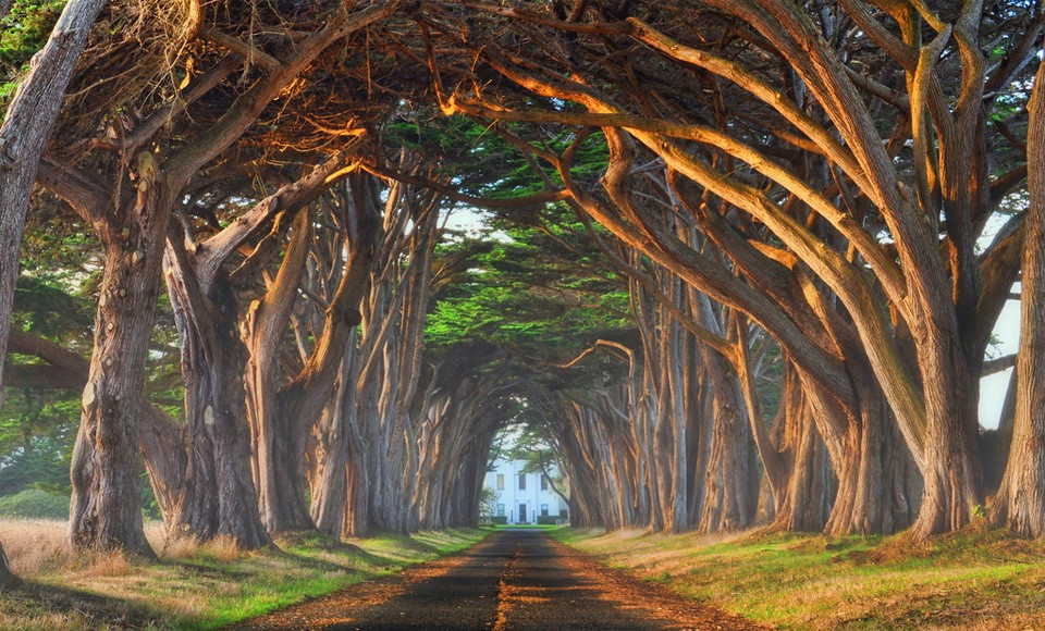 Landscape Photography - Stunning Tree Gallery | Third Monk image 1