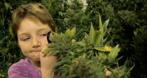 Children of Cannabis - Getting Stoned and Fighting Sickness (Video) | Third Monk