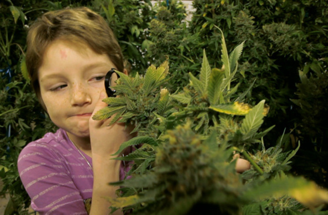 Children of Cannabis - Getting Stoned and Fighting Sickness (Video)   Third Monk