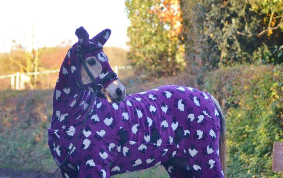 Hilarious Animals in Sweaters (Photo Gallery, Video) | Third Monk image 1