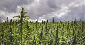 5 Uses of Hemp That Show Why It Should Be Legalized Immediately | Third Monk image 6