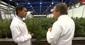 Cannabis Madness - Patients Vs Politicians (Video) | Third Monk