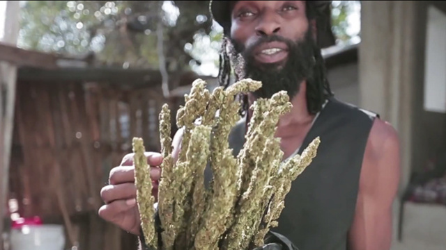 Jamaica Returning to Ganja Roots By Freeing Cannabis (Video)   Third Monk image 1