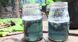 The Healing Shroom Tea of Mexico (Video) | Third Monk