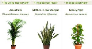 8 Powerful Plants That Detox the Air in Your Home (Guide) | Third Monk image 6
