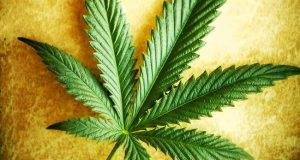 Vitamin Weed - The Health Benefits of Daily Cannabis Oil (Video) | Third Monk