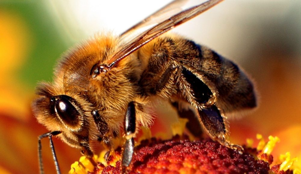 Make a Bee Bath and Help Hydrate our Pollinators    Third Monk image 3