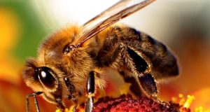 Make a Bee Bath and Help Hydrate our Pollinators  | Third Monk image 3