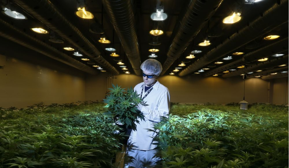 Growing 3,000 Pounds of Medical Cannabis, Step by Step Photo Gallery   Third Monk image 6