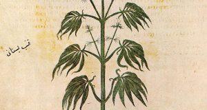Trail Blazing - Cannabis Footprints Around the World (Map) | Third Monk image 3