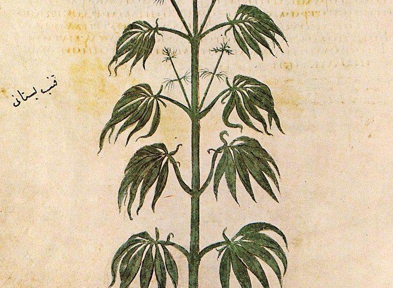 Trail Blazing - Cannabis Footprints Around the World (Map)   Third Monk image 3