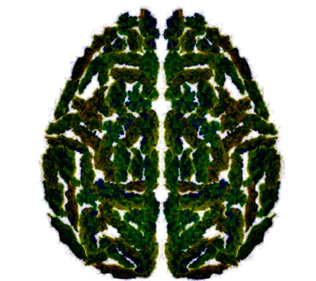 Brain on Weed - Less Gray Matter But Increased Connections? (Video) | Third Monk