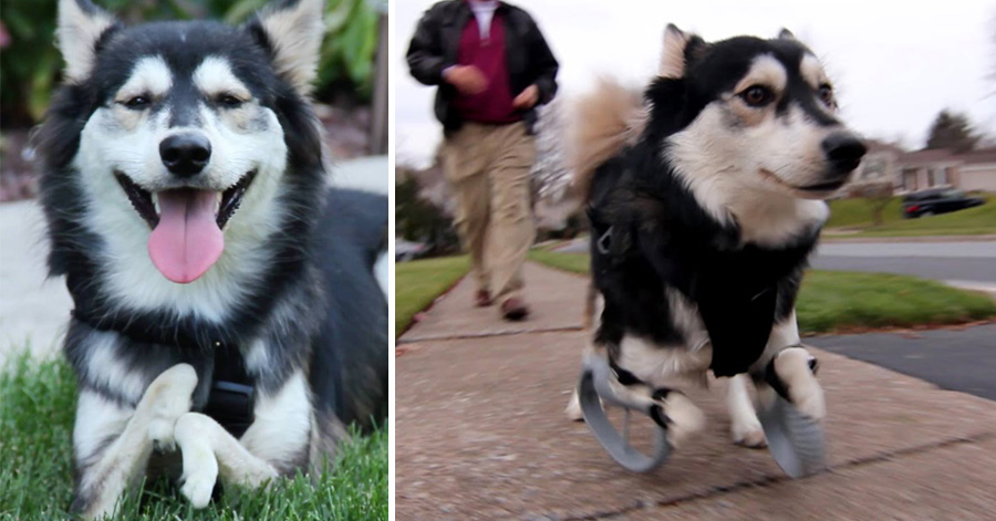 Disabled Dog Experiences First Run with 3D Printed Legs (Video) | Third Monk image 2